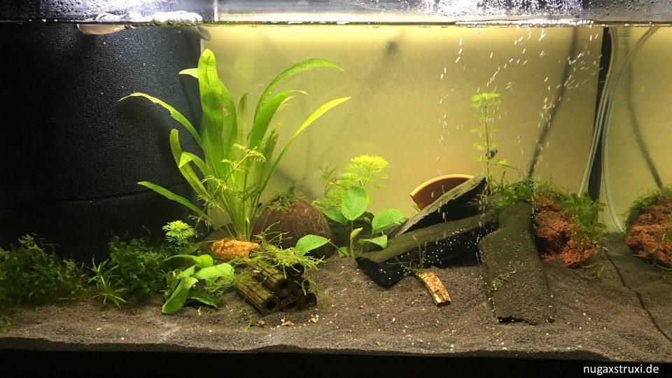 Aquarium fuer cambarellus diminutus